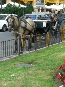 This is the first time I have seen a horse drawn carriage in Valencia.