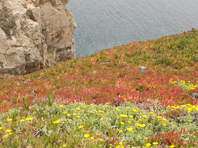 Point Reyes flowers